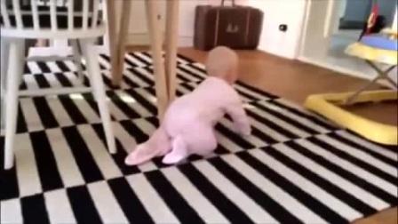 小宝宝想和狗狗玩,汪星人这样逗小主人,太可爱了!