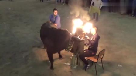 你敢上前招惹头上冒火的公牛吗?这种斗牛方式太惊险了