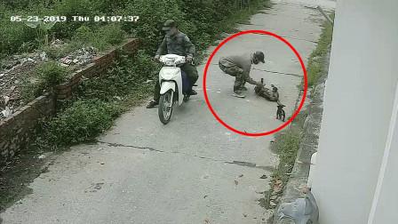 偷狗贼作案过程曝光:一人开车,一人射狗,这钱赚的昧良心!