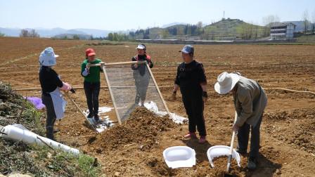 贵州大山深处创业者 种2000亩辣椒梦想带动山区农民发展