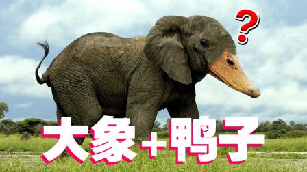 动物混合模拟器,大象加鸭子会变成什么?