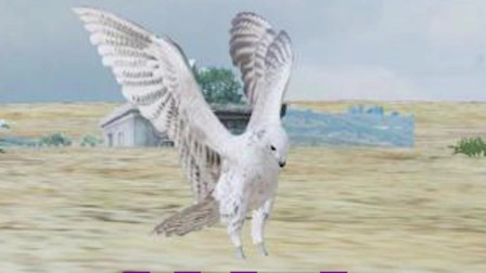 【游物语之口水吃鸡】我是一只鸟,不是鸡,你们不能吃了我