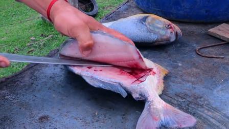 食人鱼能吃吗?它和普通鱼有什么区别,今天终于涨知识了!