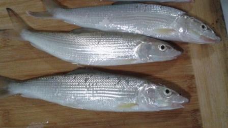 """鱼的这种""""器官""""不宜食用,90%的人不知道!下次食用要除干净"""