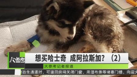 本想买只哈士奇 却变成了阿拉斯加?记者调查违规销售活体犬只现象