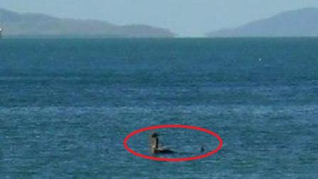 """新疆一湖泊出现""""水怪"""",专家13天奋力追击后,结果让人傻眼!"""