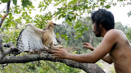"""""""野人""""爬上树冠偷蛋,不料老鹰竟然在家,接下来的一幕让人感动"""
