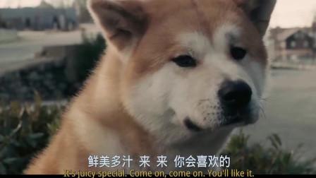 忠犬八公这一段无限催泪,我反正哭了好几遍
