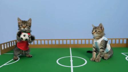 家有懒猫怎么办?让肥猫懒猫多多运动的几个小妙招