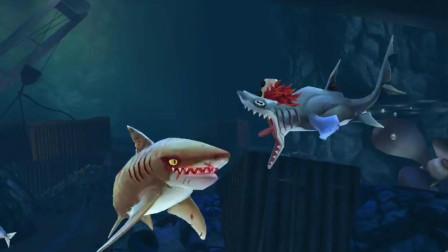 饥饿鲨世界:疯狂的小丑双髻鲨被虎鲨藐视,直接暴走