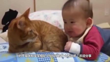 宝宝一口咬住猫咪尾巴,回头准备反击,发现是小主人后秒变初恋脸