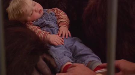 一岁萌娃被,动物园大猩猩成了保护神,这段超级搞笑不容错过
