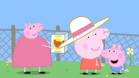 天! 小猪佩奇吃了什么东西? 为何头变得那么大?