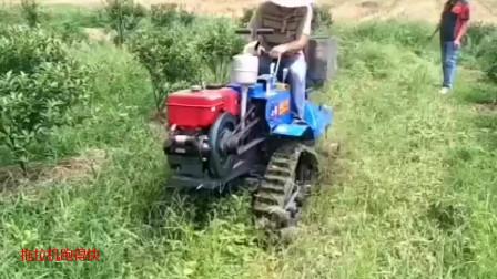 履带式果园除草机,单缸柴油机带动,除草省事了