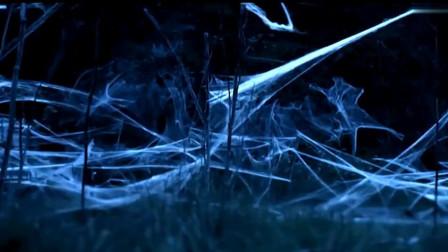特工逃离蜘蛛群,发现遍地蜘蛛网,蜘蛛仍尾随其后