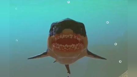大鱼吃小鱼:巨齿鲨大战鲨鱼王,你们觉的能打败它们吗?