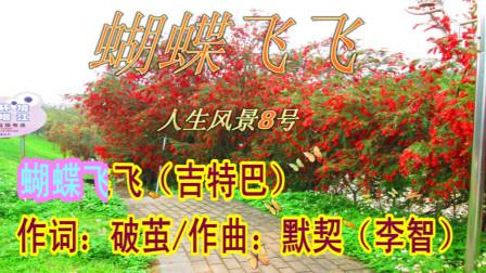 一首很好听的流行歌曲《蝴蝶飞飞》网络MV视频(吉特巴)