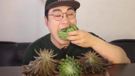 韩国大胃王胖哥,吃多肉植物,整根拿起来直接咬着吃