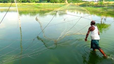 60岁大爷野外捕鱼,撒网技术一流,看看大爷收获了多少?