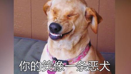 """吐槽8首令人窒息的歌词!""""你的笑像一条恶犬""""到底是什么意思?"""