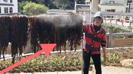 揭秘广东梅州特色食材-梅菜干,三蒸三晒,制作工序复杂!