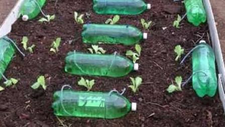 变废为宝!男子将改装过的塑料瓶放进菜地,一个月都不用再浇水