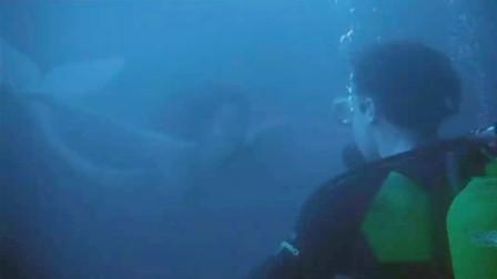 男子潜水时遇上美人鱼,本以为自己艳福不浅,却忘了它是深海巨兽