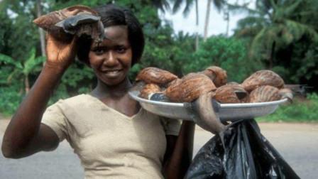 中国人不敢吃的,却被非洲人吃到快灭绝,一年要吃掉上千万斤