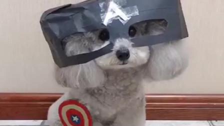 爆笑宠物视频大全 宠物搞笑视频集锦 喵星人汪星人