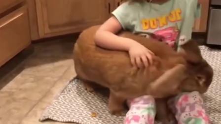 让人欲哭无泪的兔子