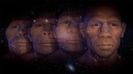 人类在进化时,抛弃了哪些东西?我们真的停止进化了吗