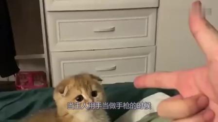 主人用手指着猫,它马上就举手投降了,能不能不要这么可爱呀