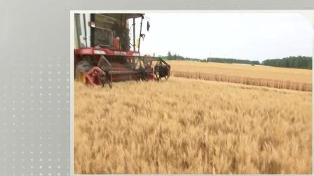 安徽4200万亩小麦圆满完成收获任务 每日新闻报 20190615 高清版