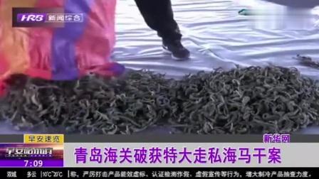 全国数量最大!青岛海关破获特大濒危物种制品海马干走私案