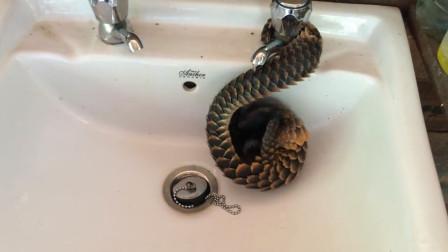 """小伙河里抓到""""似蛇似龙""""不明生物,村民看后不淡定:龙崽子"""