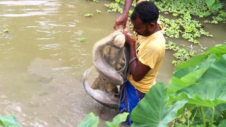 野外撒网捕鱼,一网下去,收获的全是大鱼,厉害了!