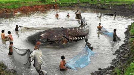 """黑龙江捕获世界上""""最大淡水鱼"""",重达几千斤,曾与恐龙同一时期!"""