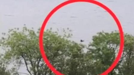 """又出现了!2019年""""尼斯湖水怪""""频繁出现,目击者:好像黑色动物"""