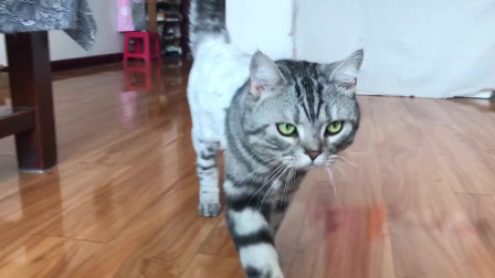 这铲屎官的技术非常好了,看猫咪这得意的表情