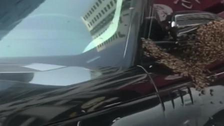 马蜂在路虎车上筑巢,我就等着看车主的表情了!