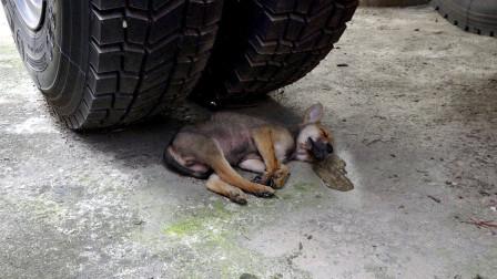 小伙救助躺在轮胎下的流浪狗太暖心了