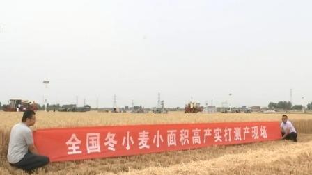 早安山东 2019 亩产836.2公斤!桓台刷新全国冬小麦高产纪录