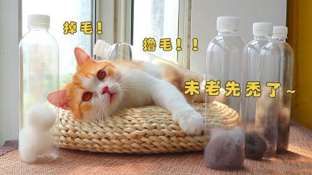 """为收集猫毛,5只猫被强行""""撸秃"""",小橘猫毛量喜人!"""