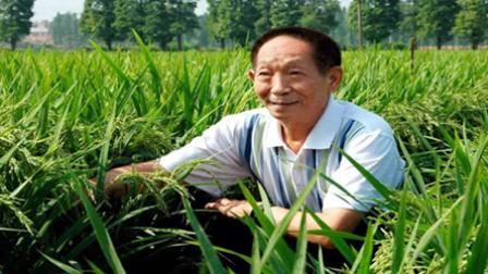 沙漠种水稻!袁隆平再次挑战人类极限:能喂饱15亿人