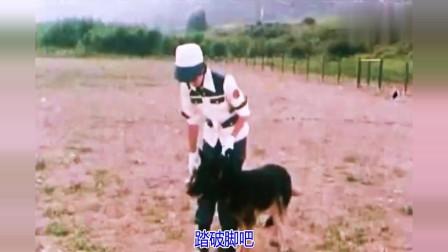 1977日本电视剧《警犬卡尔》主题曲《像疾风一样》演唱:木之内绿