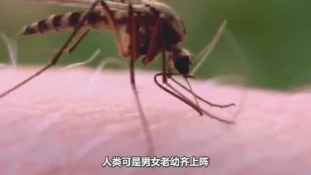 蚊子在吸血时能不能当场拍死?显微镜放大50倍,结果太意外!
