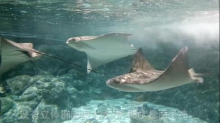 香港海洋水族馆 人在水下走 鱼在头上游
