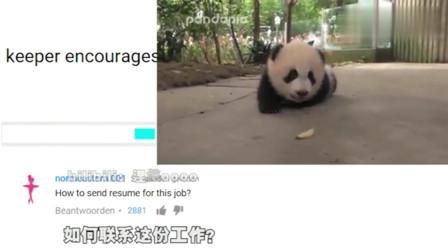 老外看中国:外网网友评论饲养员鼓励熊猫宝宝走路