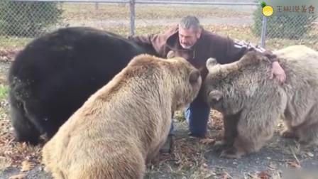 主人旅行回家,三只熊纷纷上前撒娇卖萌,成精了