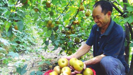 """农村生活新鲜事 俗语:""""男怕柿子女怕梨,母猪最怕西瓜皮"""",啥意思?"""